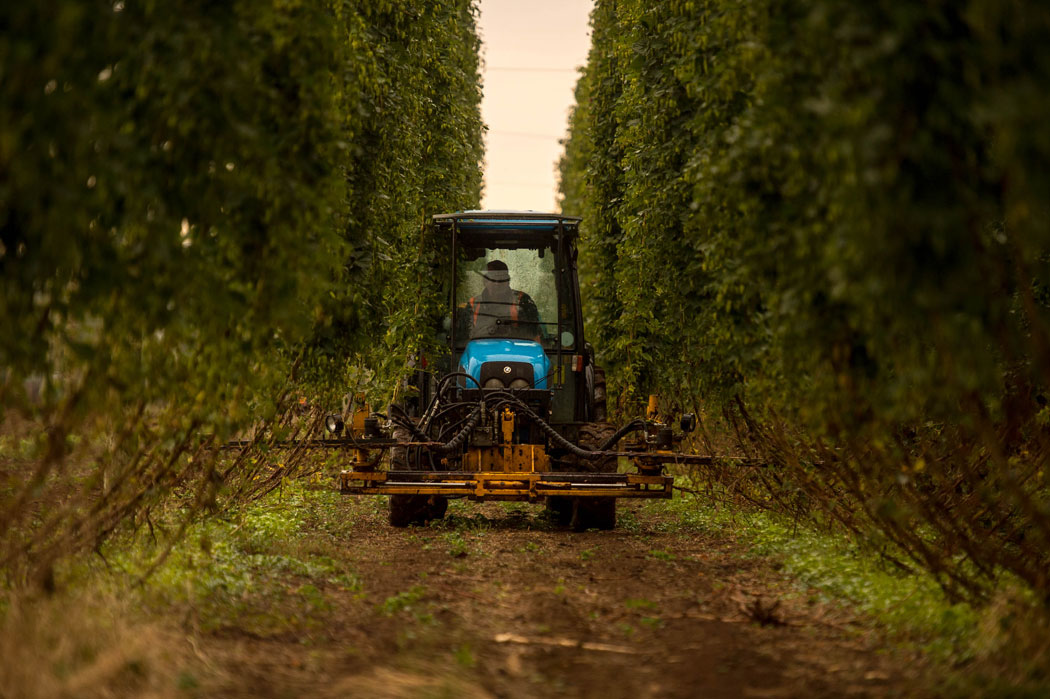 HPA-2014-Harvest-cutting-the-bines-1.jpg